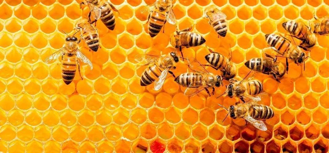 Словенија на папата Франциск ќе му подари кошница со пчели