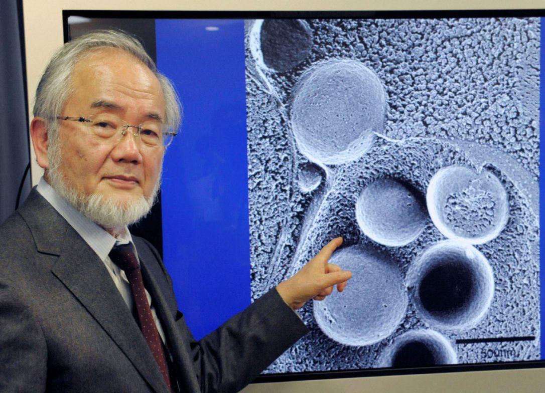 Нобелова награда за 2016: Научно докажана полезноста на постот